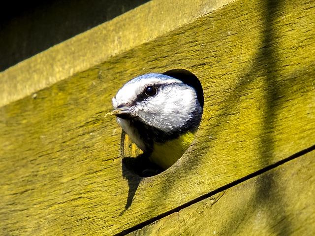 diamètre trou nichoir oiseau