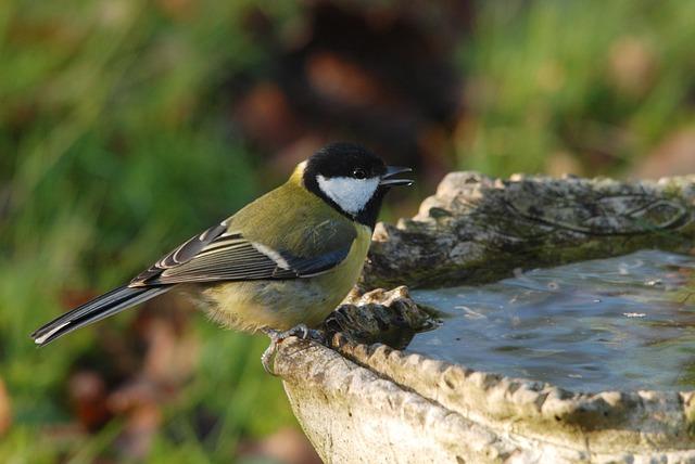 bain d'oiseau