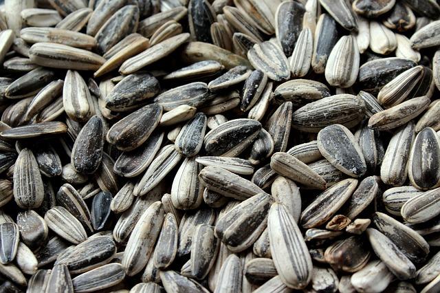 graines de tournesol noires