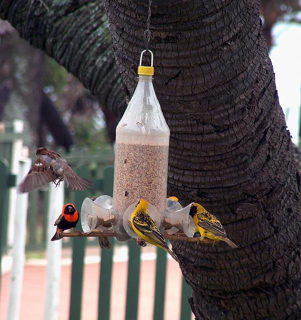 mangeoire oiseau bouteille plastique