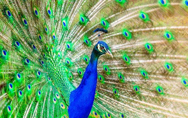 les plus beaux oiseaux du monde