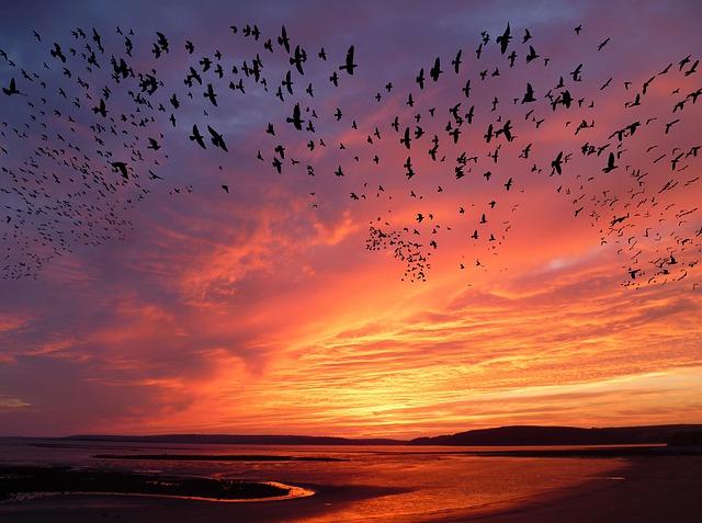 migration d'oiseaux